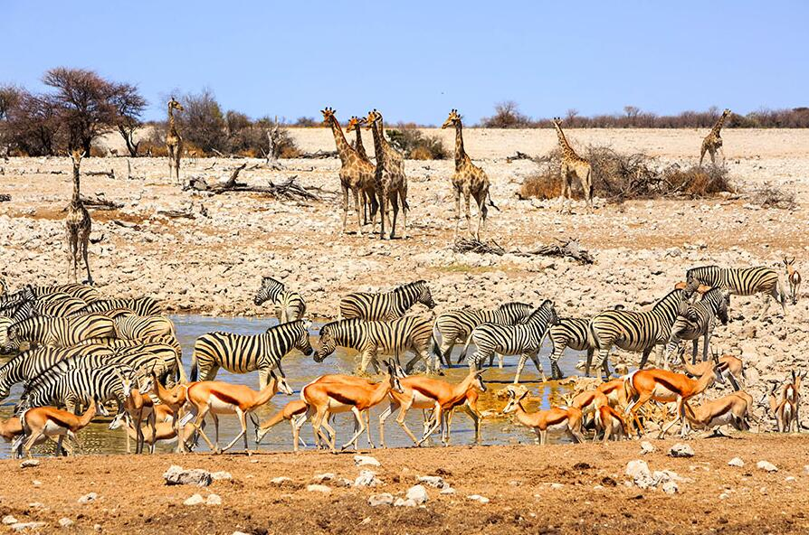 Best travel time for wildlife viewing and safaris in Namibia