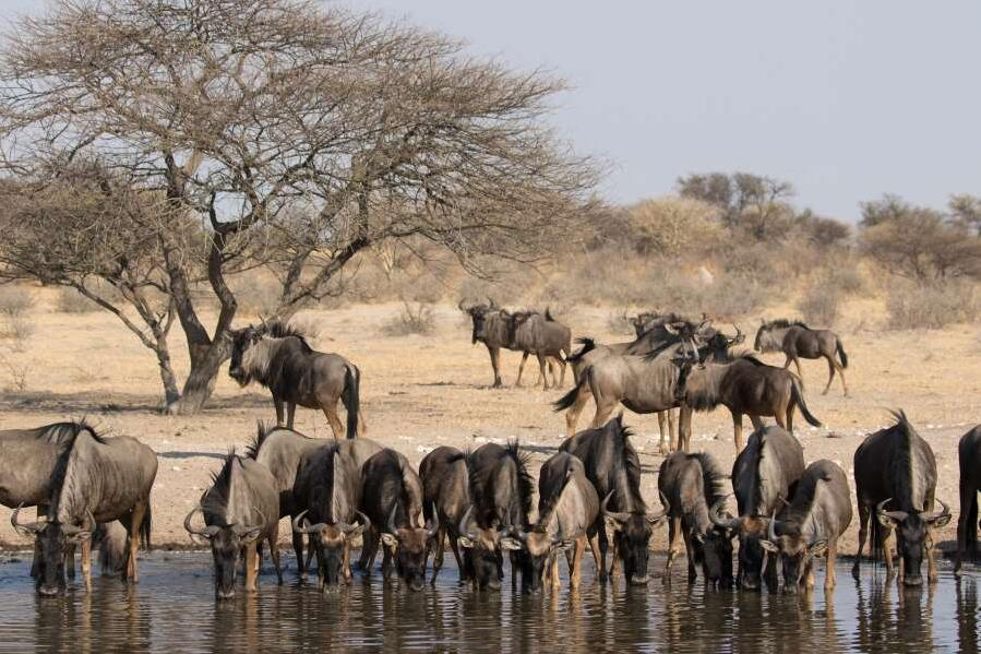 Best travel time for other regions and activities in Botswana