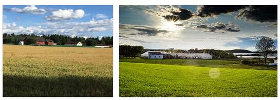 Agriculture in Norway 1