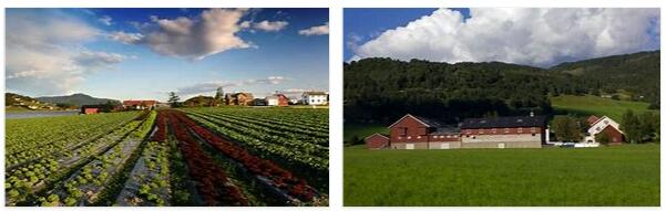 Agriculture in Norway 3